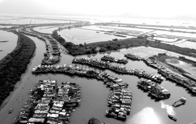 8月1日,大批渔船在广东省台山市横山渔港避风。新华社发