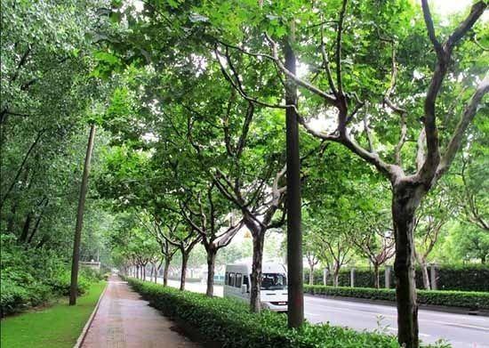 上海热线HOT新闻 上海这几个区最有钱 你在哪个区