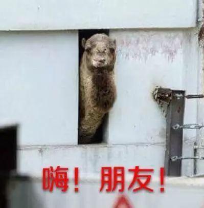 """八达岭野生动物园游人骑骆驼被摔:老人凭什么就""""活该"""""""