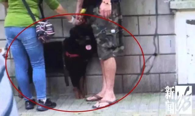上海再发犬只伤人事件 牵绳大狗咬伤日籍女子 狗主:拉不动
