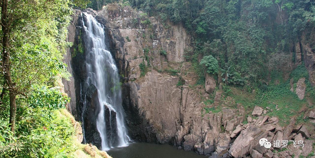 小象跌落瀑布死亡 5只成年大象为救小象摔死