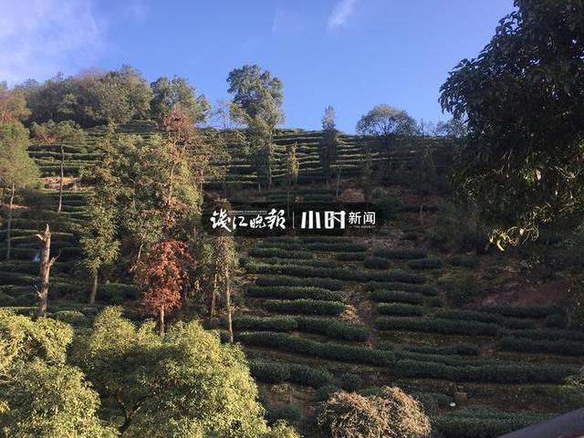 """""""我是遇到热心人了呢?还是被套路了?""""上海游客在九溪买了茶叶,越想越不是滋味"""