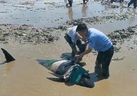 12头疑似鲸豚搁浅浙江海域 已成功营救10头