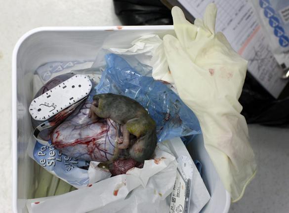 垃圾袋里的流浪动物:无人领养