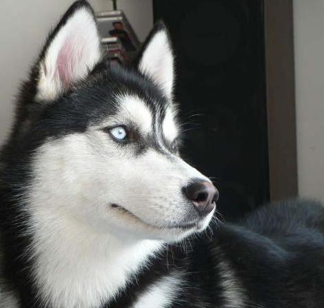 主人出门家中着火 宠物狗趴窗口学狼叫引来消防