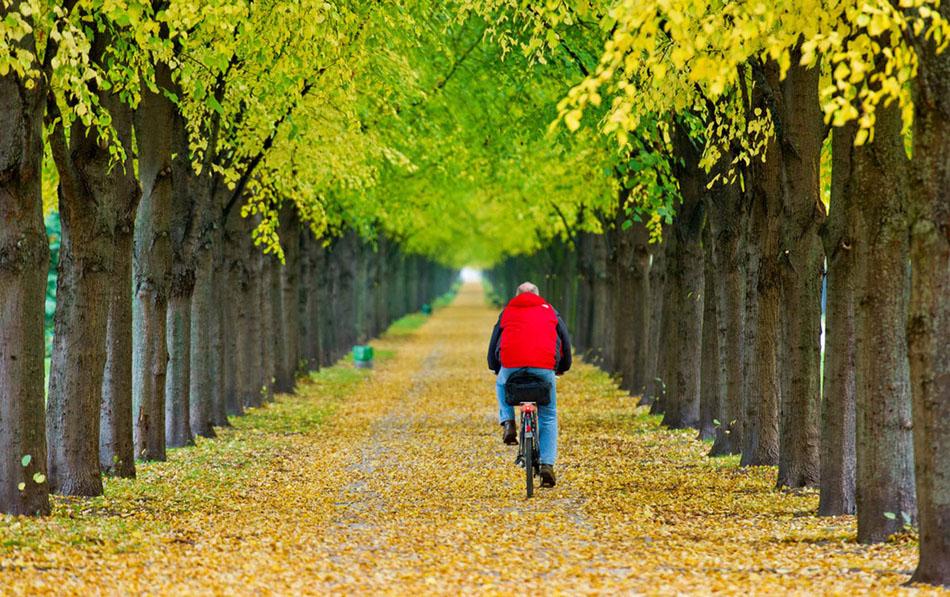 经过秋意浓浓的果园.-全球各地秋天的景色图片