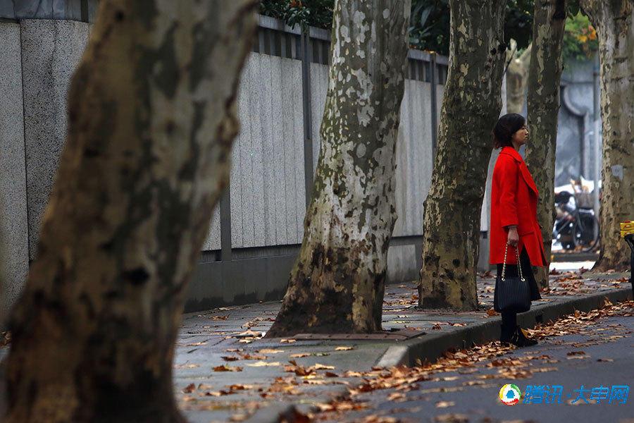 徐汇区余庆路,街道两旁的梧桐树树黄叶绚烂,迎风飞舞,在雨中构成了一