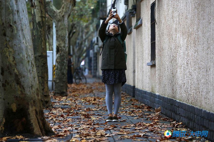 上海热线新闻频道-- 上海再现深秋美景 雨中落
