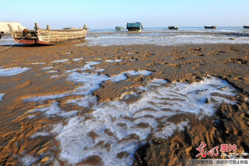 2015年12月17日,山东省青岛市胶州湾,渔船停泊在堆积海冰的滩涂上.