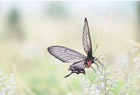 上海动物园蝴蝶展开幕 将展示近30种活体蝴蝶