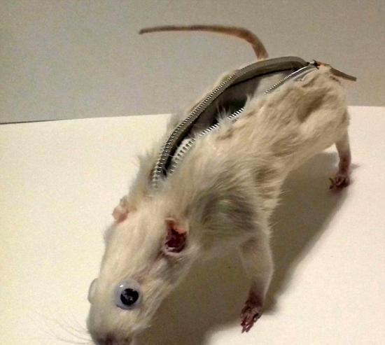 老鼠素描画法步骤图解