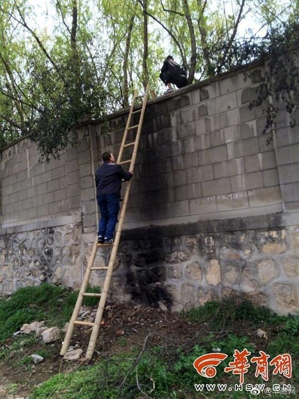 图说:秦岭野生动物园附近围墙外,也有人搭梯收费帮助游客进入园区