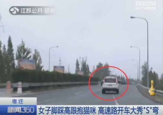 司机高速抱猫开车