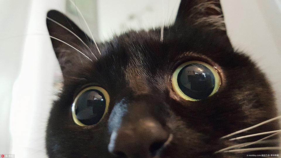 小黑猫靠铜铃大眼爆红网络 好奇表情包俘获千万粉丝图片