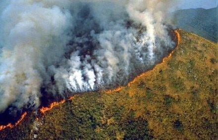 亞馬遜雨林大火 人類可能會受到指責