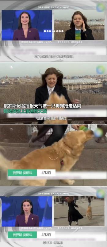 《【星图在线平台】记者直播时被狗狗抢走话筒 随后开始追狗大战》