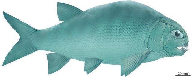 《【星图注册平台】贵州发现2.44亿年前大型盘州暴鱼 是暴鱼属在贵州的首次发现》